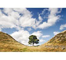 Sycamore Gap, Hadrian's Wall Photographic Print