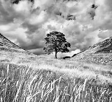 Sycamore Gap, Hadrian's Wall by Chris Frost Photography