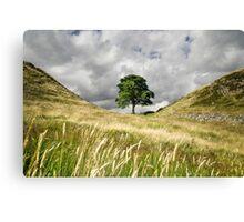 Sycamore Gap, Hadrian's Wall Canvas Print
