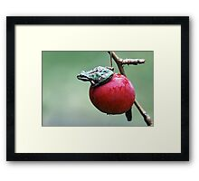 Pacific Tree Frog On A Crab Apple Framed Print