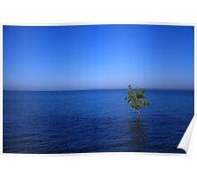 Lone Mangrove Poster