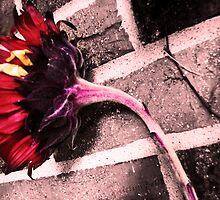 Burnt Bloom by Kaitlyn Bell