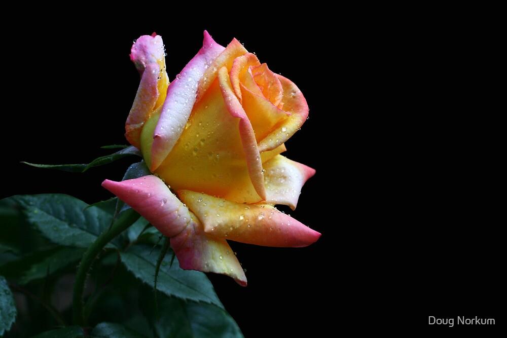 Peachy! by Doug Norkum
