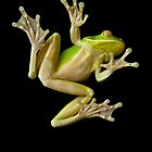 White Lipped Green Tree Frog by RichardCurzon