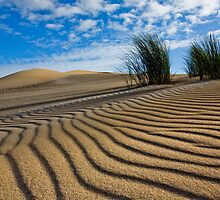 Afternoon Shadows on Sand by pablosvista2