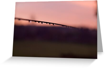 On the fence by Paul Davis