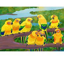 Parrots Photographic Print