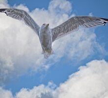Flight of the Mighty Gull by Skye Ryan-Evans