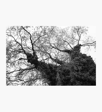 Tree on Whidbey Island Photographic Print