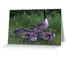 Mother And Her Babies  Greeting Card