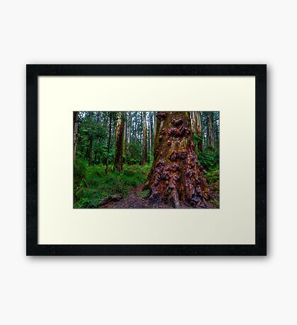 Old Forest Giant Framed Print