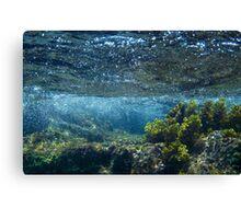 Under the Caribbean Sea Canvas Print