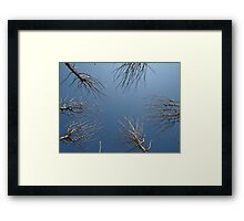 Trees to the sky Framed Print