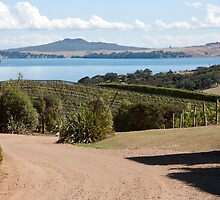 Vineyard View by phil decocco