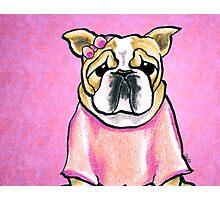 Pink Bow Bulldog Photographic Print
