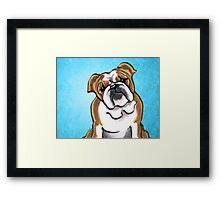 Bulldog Brown/White Royal Framed Print