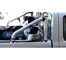 Backseat Drivers Photographic Print