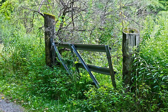 Pasture gate by Carolyn Clark