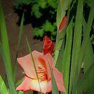 Peach-colored gladiolus by Maria1606