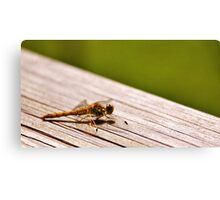 Gossamer wings Canvas Print