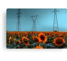 Sunflower Power Canvas Print