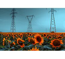 Sunflower Power Photographic Print