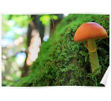 Mossy Maine Mushroom Poster