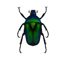 Flower chafer Photographic Print