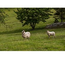 Mother sheep watching over her lamb Photographic Print