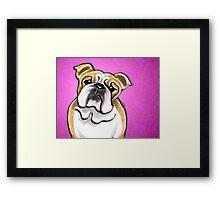 Bulldog Fawn/White Pink Framed Print