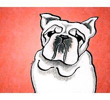 White Bulldog Red Photographic Print