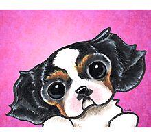 CKCS Tricolor Puppy Magenta Photographic Print