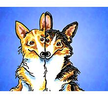 Corgis in Love Blue Photographic Print