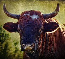 A Lotta Bull by vigor
