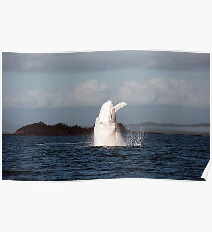 The Big White Whale Poster