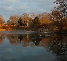 Reflections In My Favorite Pond by Georgia Mizuleva