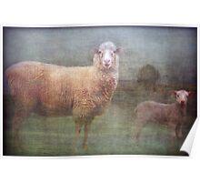 Springtime Sheep - Ewe and Lamb Poster