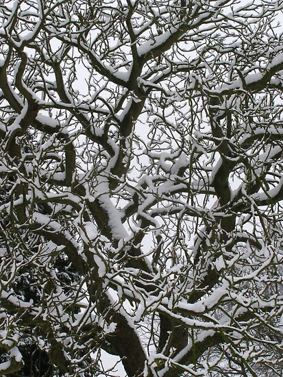 Winter Branches by wiggyofipswich