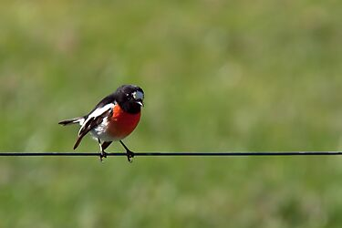 Bird on a Wire by John Sharp