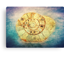 The Shell - Fibonacci (The Golden Spiral) in Nature Canvas Print