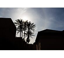 Silhouetted palm trees  Photographic Print