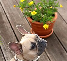 Flower & Dog Still Life by karina5