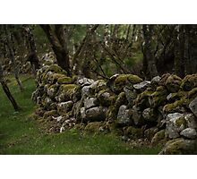 Old moss covered rock fence Photographic Print