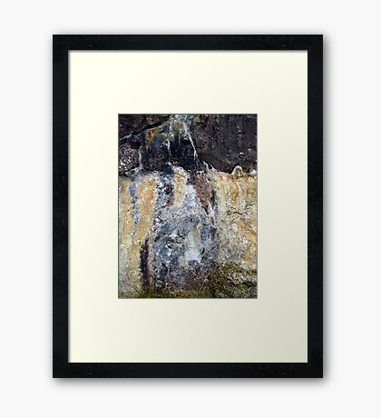 Image of a Wolf Framed Print