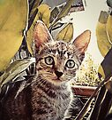 Mouser. by John Medbury (LAZY J Studios)