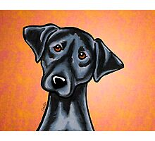Black Lab Listen Up Orange Photographic Print