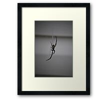"Argiope aurantia ""writing spider"" Framed Print"