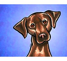 Chocolate Lab Listen Up Blue Photographic Print
