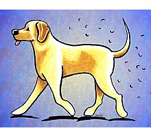 Yellow Lab Shedding Dog Hair Blue Photographic Print