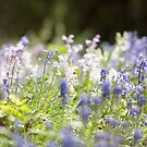 Bluebells  by Candypop